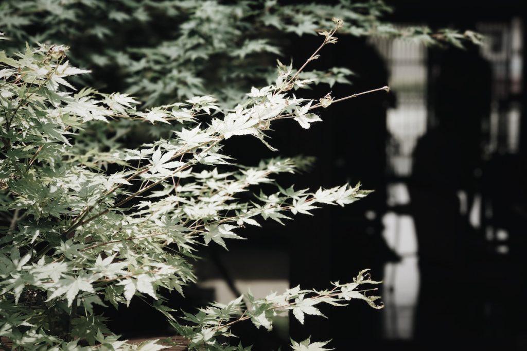 「京都 月と」
